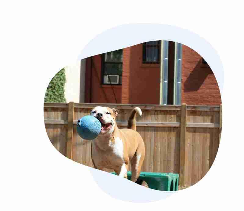 Puppy Training (Workshops)