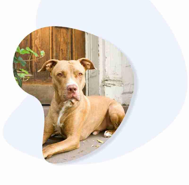 Long Island <br/>Dog Training Programs