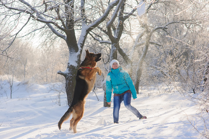 Girl Training German Shepherd Dog